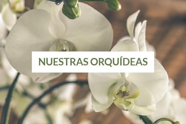 flores y regalos maria orsini
