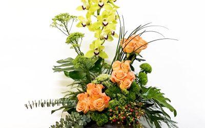 Volcán de orquídeas y grecas