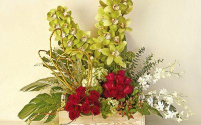 Danza de Orquídeas y Rosas