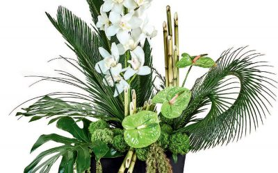 Ceremonia de Orquídeas y Anturios