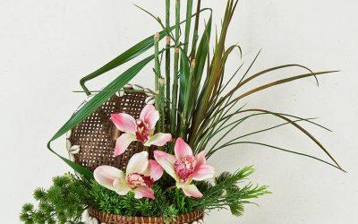 Trío de Orquídeas