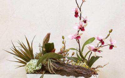 Tronco con Orquídeas
