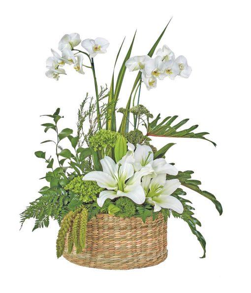 Arreglos florales con orquideas a domicilio méxico